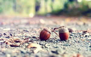 Acorn slideshow background picture