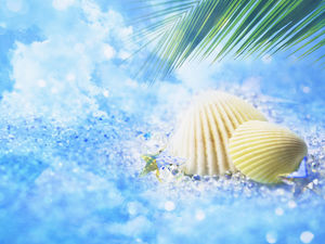Nice Shell Blue Background Picture