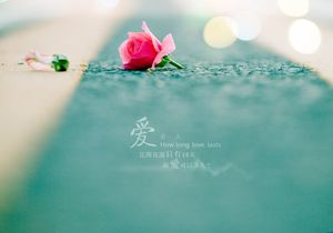 Roses Elegan Gambar Latar Belakang Estetika Cinta Ppt