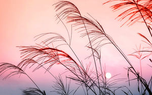 Sunset in the reed slideshow background picture
