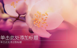 Warm flowers background elegant purple ppt template
